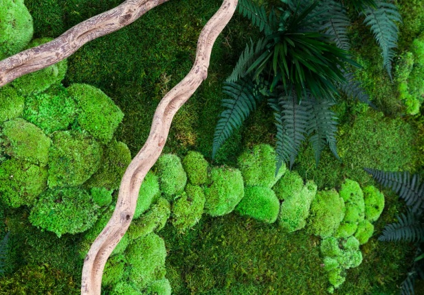Mossy_Detail_2
